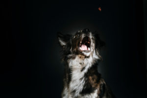 Hundefotos Aachen Tierarzt Tierfotograf