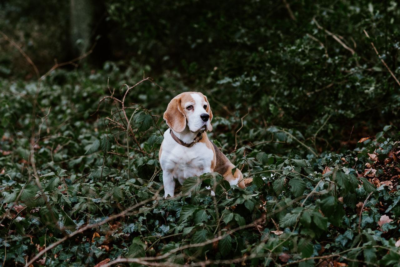 Hundefotos Aachen Tierfotograf Tierarzt
