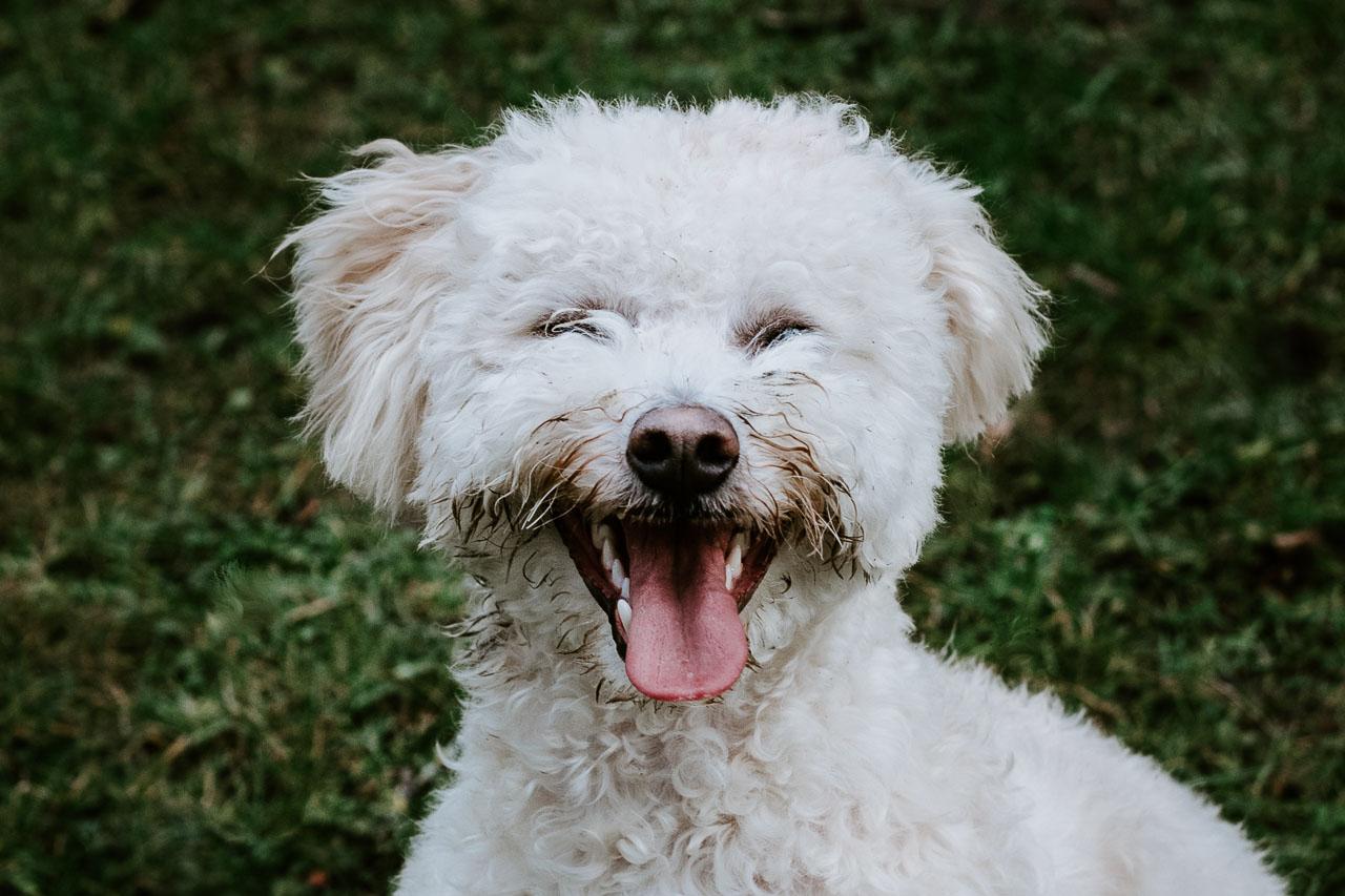 Hundefotos Tierfotos Aachen Tierarzt