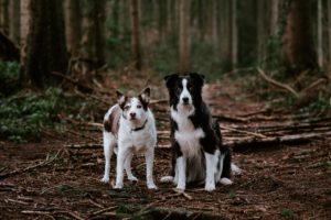 Hundefotos Aachen Tierarzt Dr Eschricht Tierhilfe Belgien Fotograf Aachen Sarah Thelen