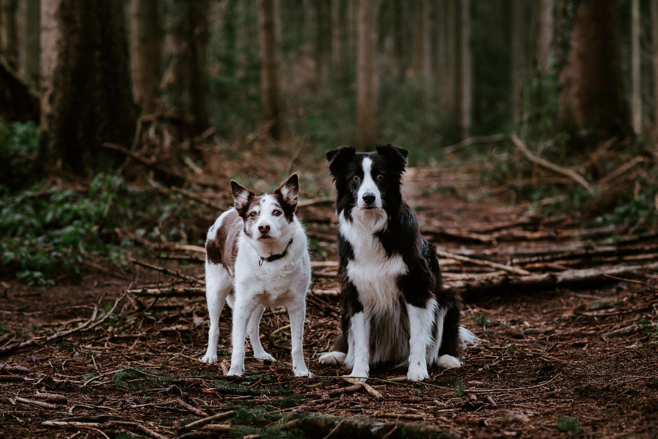 Hundefotos Tierfotos Aachen Tierarzt Hundeporträt