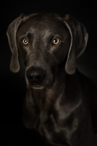 Hundefotos Aachen Pferdefotos Tierfotograf Tierarzt