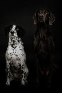Hundefotos Aachen Tierfotos Tierarzt Tierfotograf