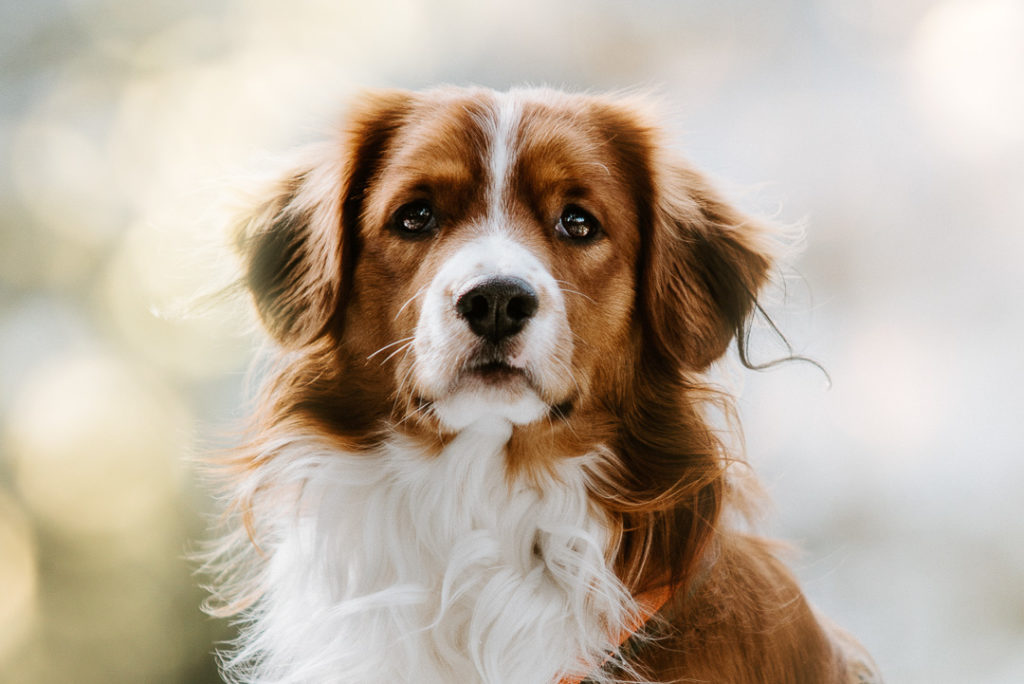 Hundefotos Tierarzt Tierfotograf Aachen