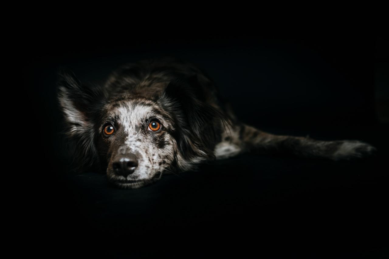 Hundefotos Tierfotograf Tierarzt Aachen