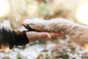 Hundefotos Tierfotograf Aachen