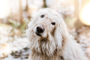Hundefotos Tierfotos Tierfotograf Aachen AC Tierarzt © Sarah Thelen-8