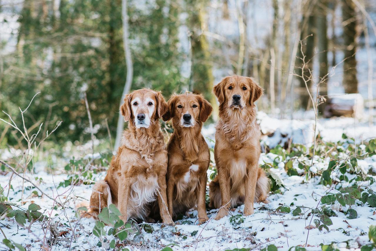 Hundefotos Aachen Tierarzt Aachen Dr Eschricht Tierhilfe Belgien Fotograf Tierfotograf