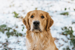 Hundefotos Tierfotos Tierfotograf Tierarzt Aachen Fotograf Sarah Thelen