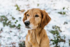 Hundefotos Tierfotos Tierfotograf Fotograf Aachen Tierarzt © Sarah Thelen-44