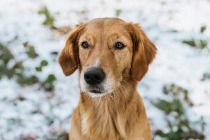 Hundefotos Aachen Tierfotos Tierfotograf Tierarzt