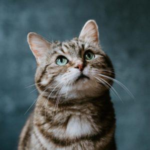 Katzenfotos Tierfotos Aachen Tierfotograf