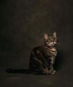 Katze im Fotostudio Tierfotograf Aachen © Sarah Thelen