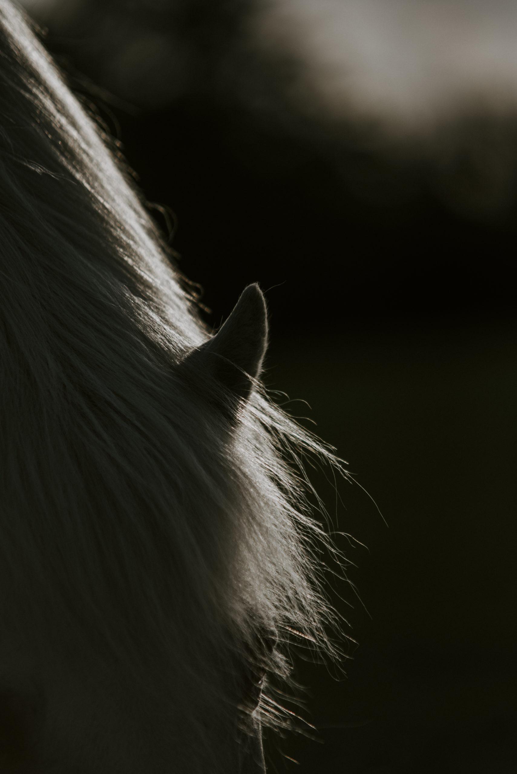 Pferdefotos Aachen